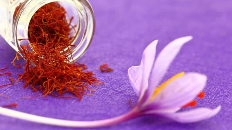 10 Best Saffron Brand in India 2021 (Kesar) - Buying Guides & Reviews